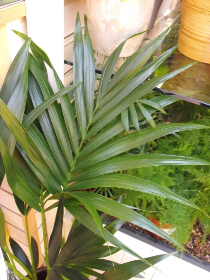 List Indoor Plants