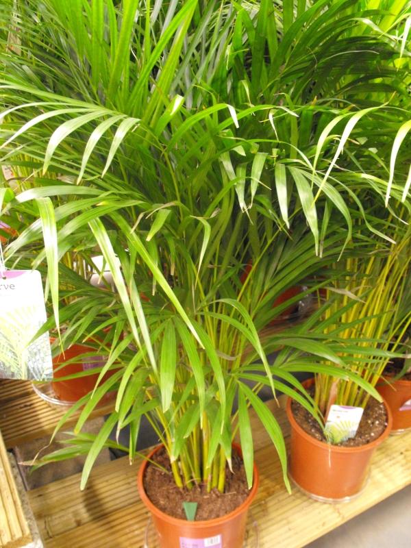 Indoor Plants Names