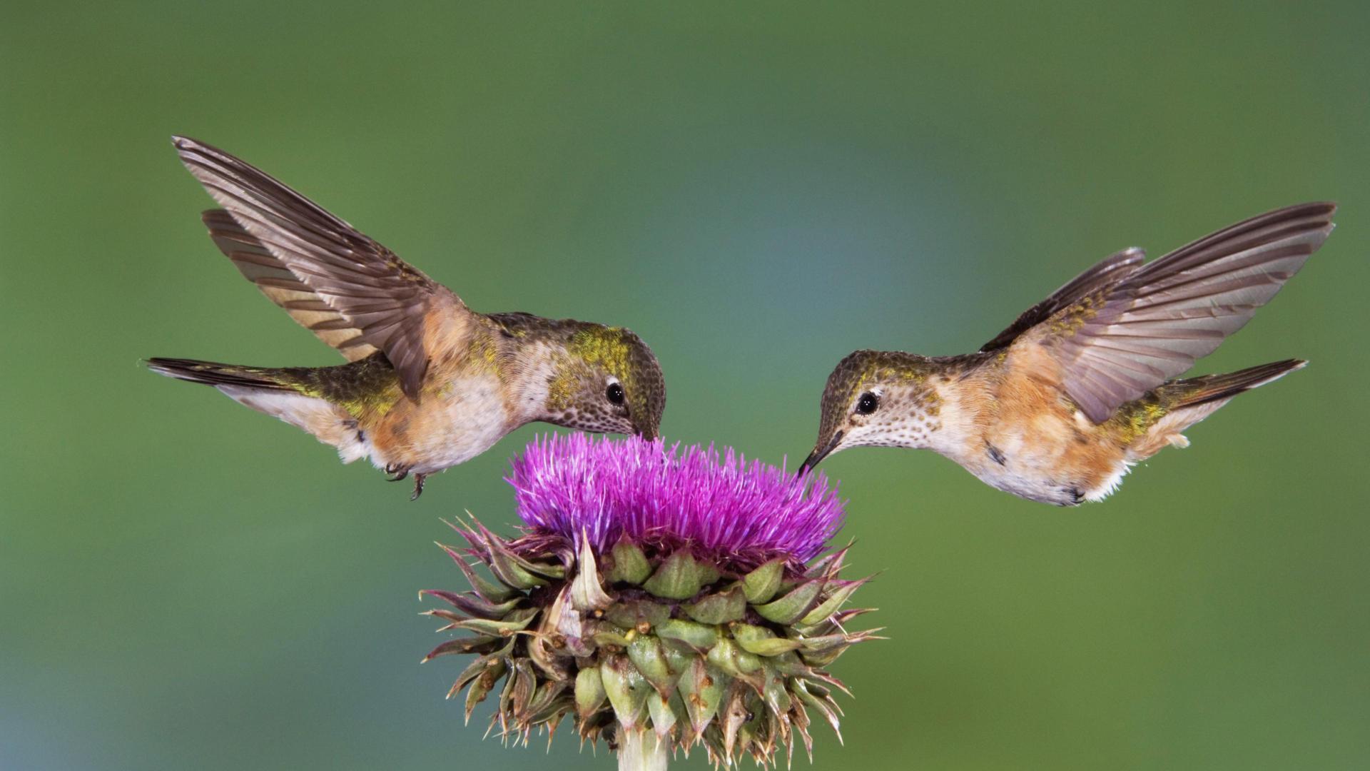 Yard Birds Your Love