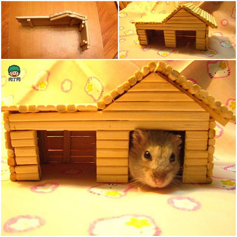 Hamsters Ball Dogs Small