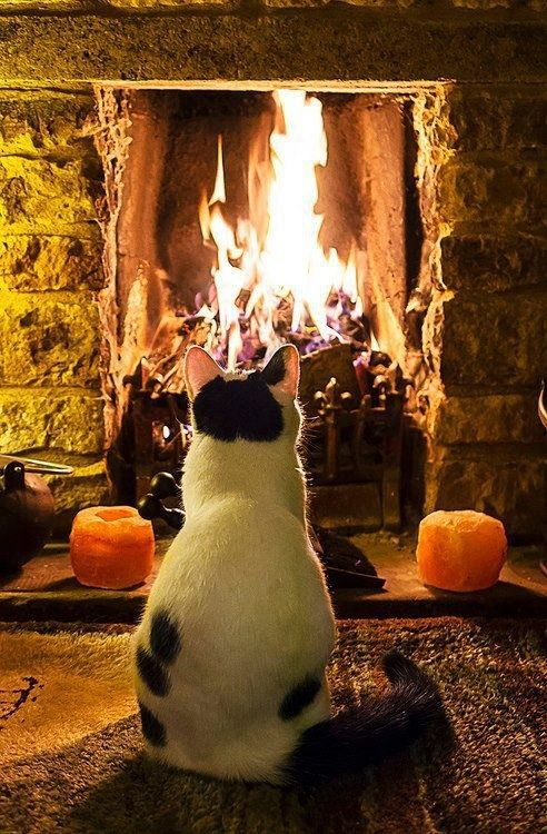 11 Cats Sitting By The Fireplace Will Make You Feel All