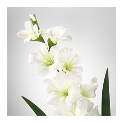 SMYCKA Artificial flower   IKEA SMYCKA Artificial flower  Gladiolus  white