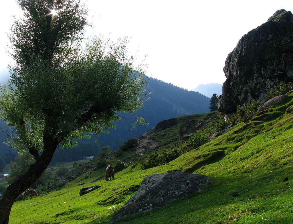 Aru Valley India Travel Forum Indiamike Com