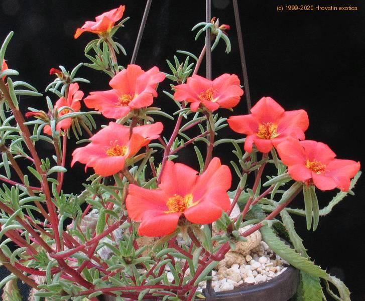 Flowering Water Plants