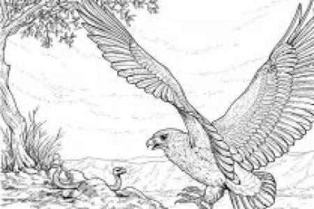 Results for Dibujo De Una Aguila Para Pintar
