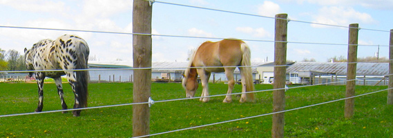 Best Electric Fence Horses