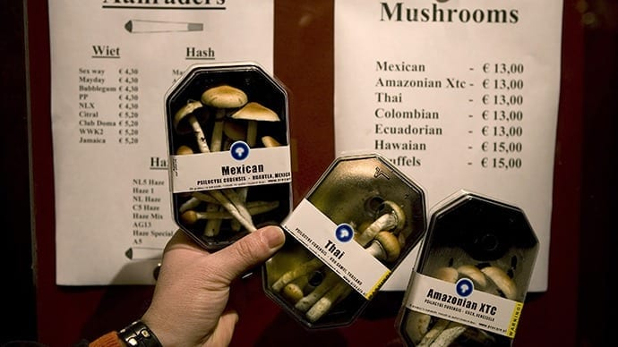 Magic mushroom depression trial tripped up by 'absurd' drug laws