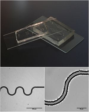 Microfluidic breakthrough in biotechnology