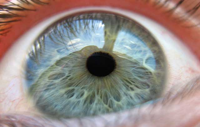 UFS claims 'eye-tracking' breakthrough
