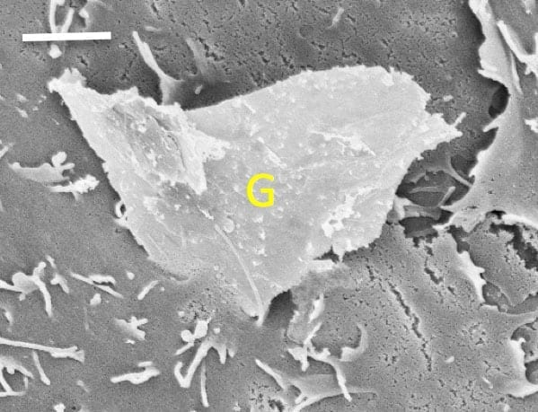 Jagged graphene can slice into cell membranes