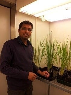 New discovery could stimulate plant growth and increase crop yields