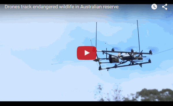 Drones used to track wildlife