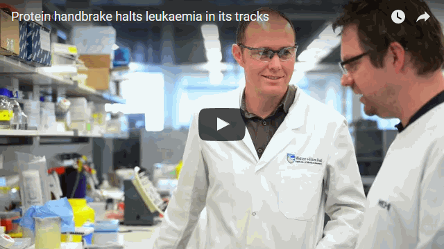Protein handbrake halts leukaemia in its tracks