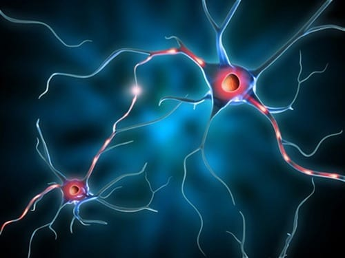 Regenerating Memory with Neural Stem Cells