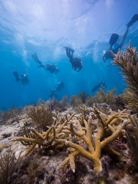 INITIATIVE TO RESTORE ONE MILLION CORALS LAUNCHES IN THE CARIBBEAN AND FLORIDA KEYS
