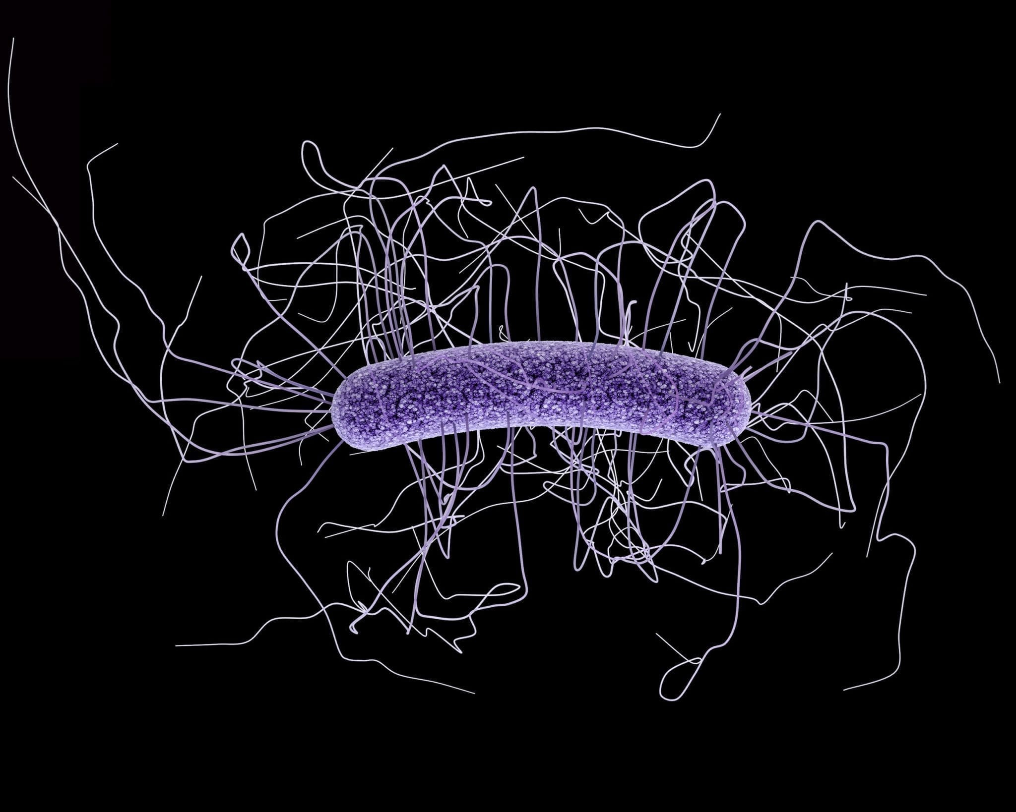 Could C. difficile also be transmitted via our food?