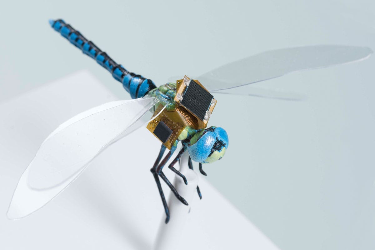 Insect cyborg dragonfly debuts