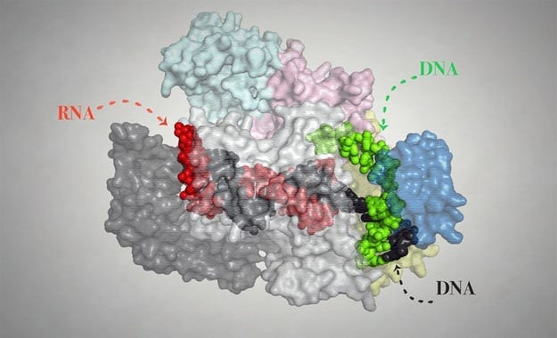 Breakthrough in CRISPR technology to improve genome editing