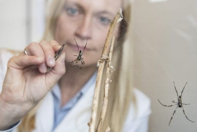 Spider threads can repair damaged nerves and tissue
