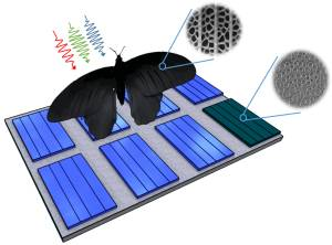 Photovoltaics: Light Absorption Can Be Enhanced by Up to 200 Percent?