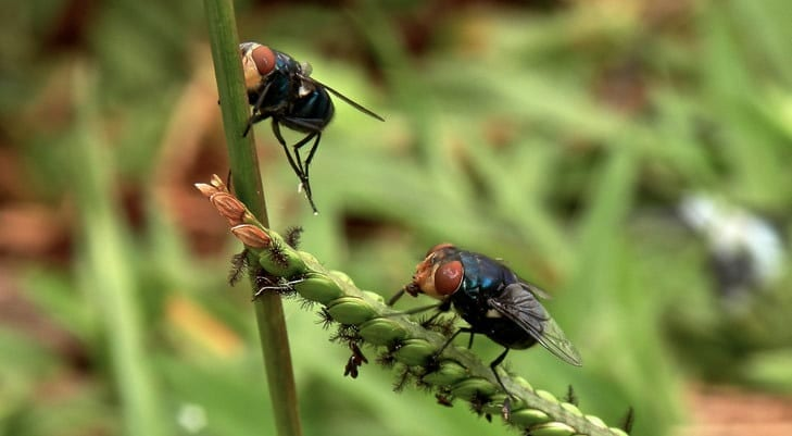 Could flies help to monitor disease outbreaks by acting as autonomous bionic drones?