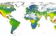 Using machine learning to predict worldwide plant-conservation priorities
