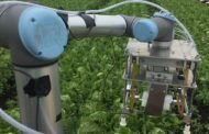 Using machine learning and robots to harvest lettuce