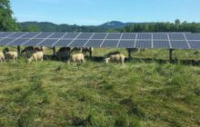 Placing solar panels on agricultural lands maximizes their efficiency