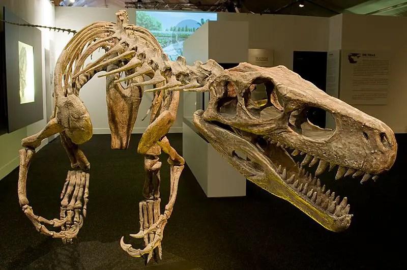 Mammals After Dinosaurs