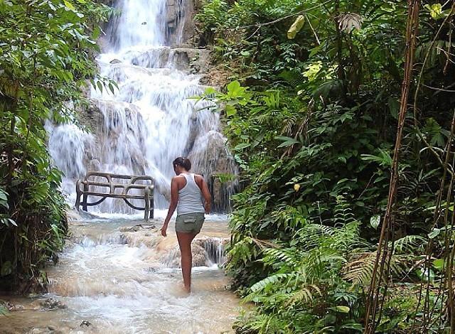 Tropical Rainforest Description