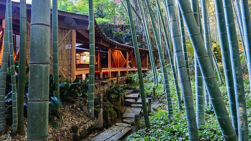 Thick Bamboo Plants