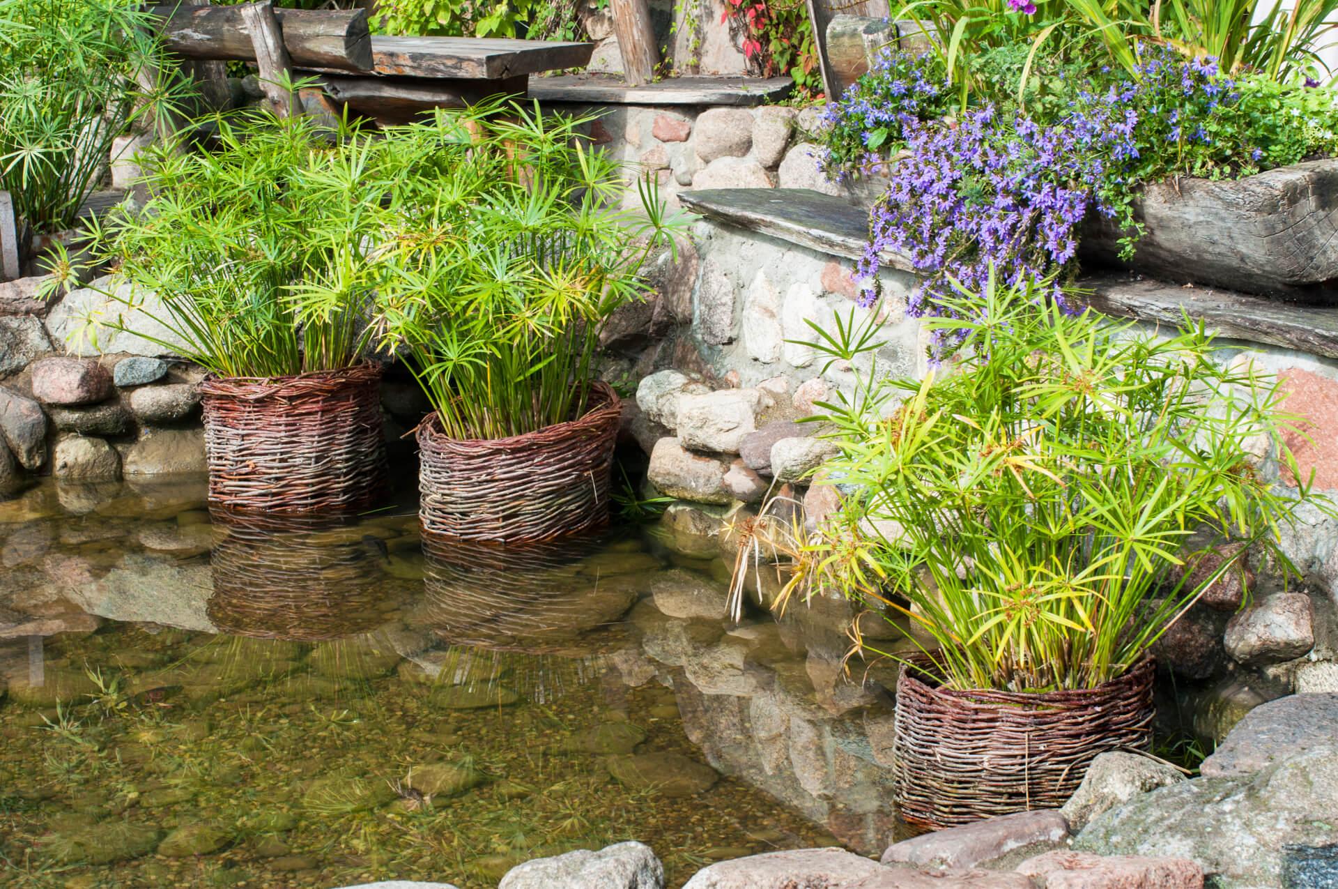 Building Water Garden