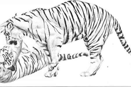 easy tiger face drawing pencil easy things to draw » 4K Pictures ...