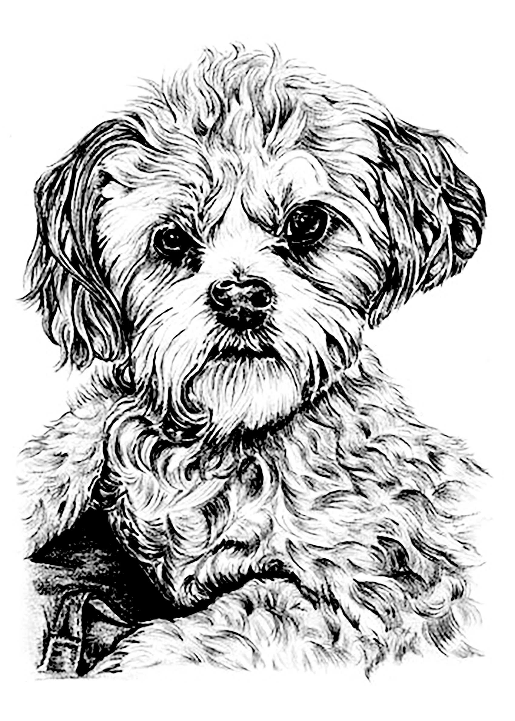 Dog Dogs Coloring Pages For Adults Justcolor