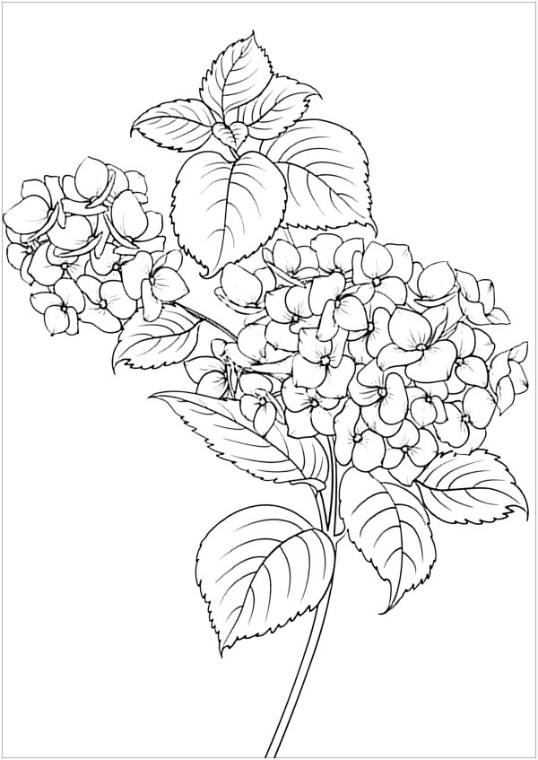 coloring pages flower # 25