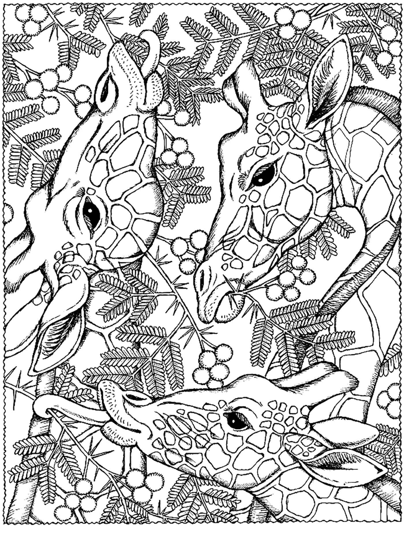 Giraffes Heads Giraffes Coloring Pages For Adults Justcolor