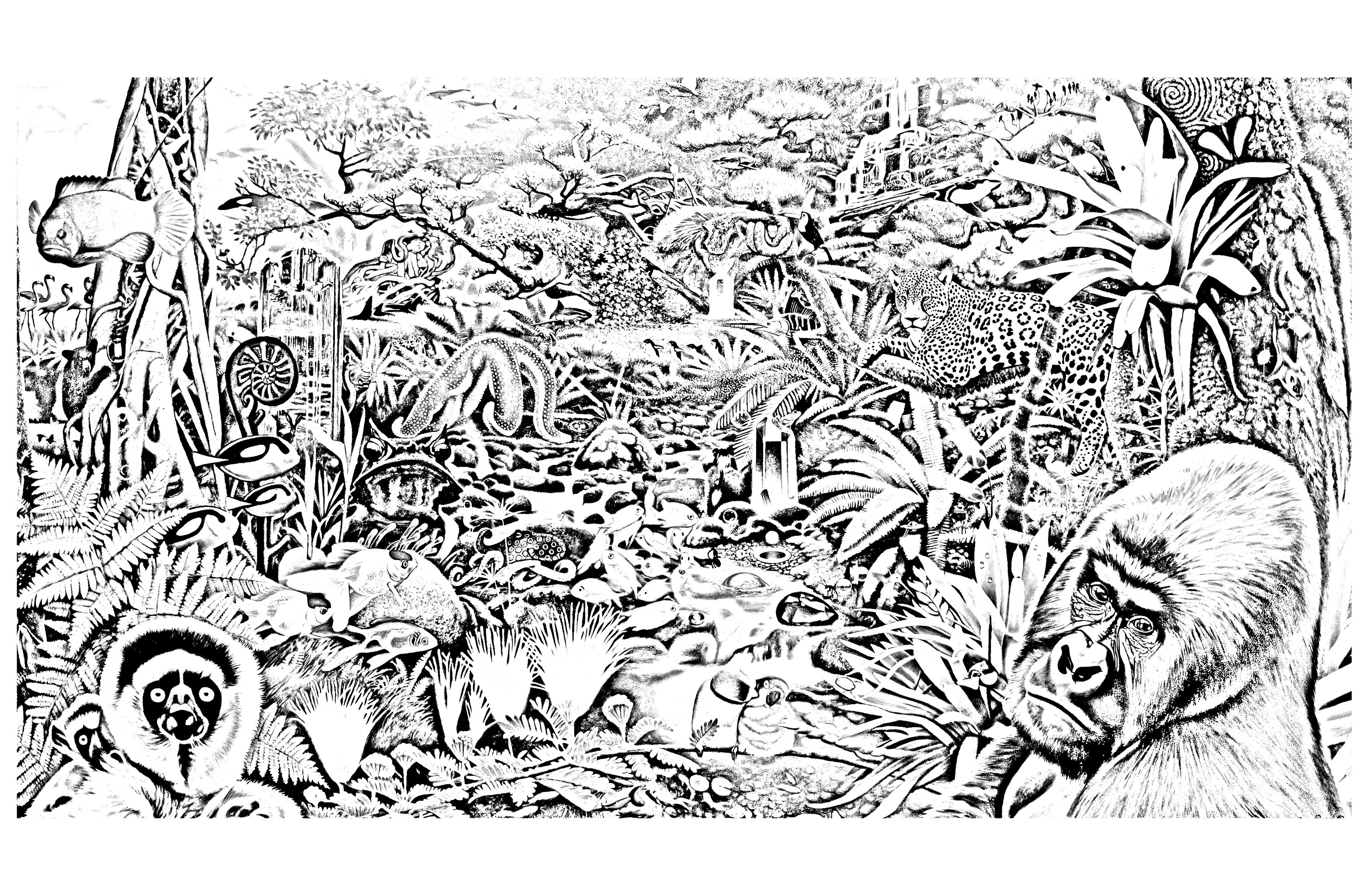 Jungle Forest Animals Jungle Forest Coloring Pages For