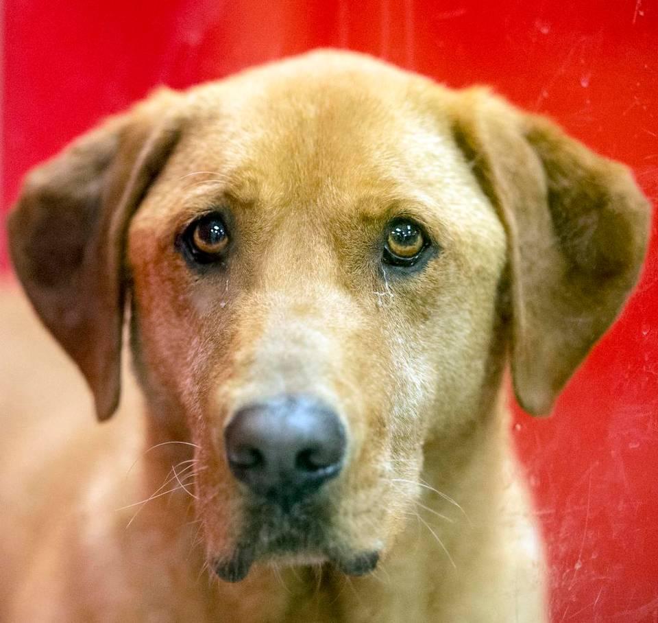 Photo Gallery: Half price adoptions at Great Plains SPCA ...