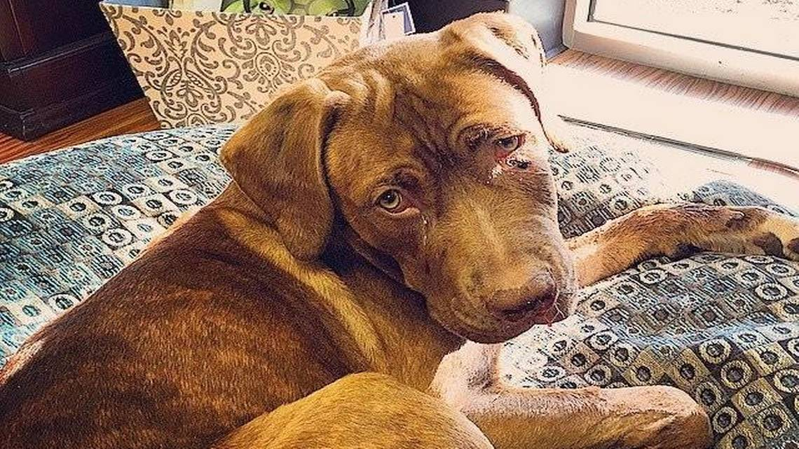 Great Plains SPCA is raising money for a dog shot in the ...