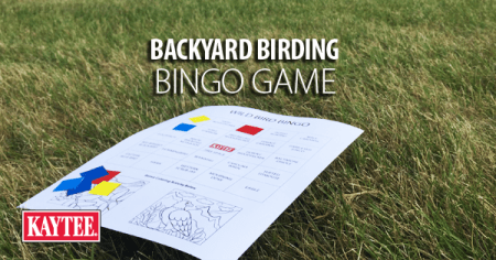 Backyard Birding Bingo Game P backyard birding bingo game png