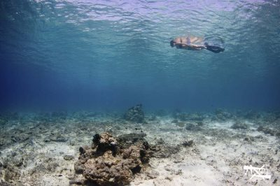 Private snorkeling trip at Gili Trawangan, Meno and Air ...