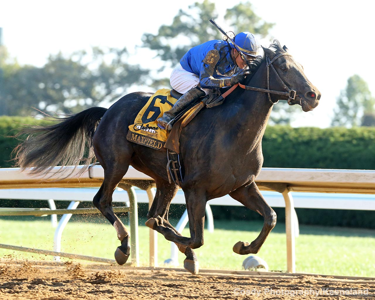 Road To The Kentucky Derby Horse Profile Maxfield