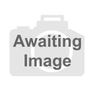 Multi Fix Masonry Screws Kernow Fixings Multi Fix Masonry Screws