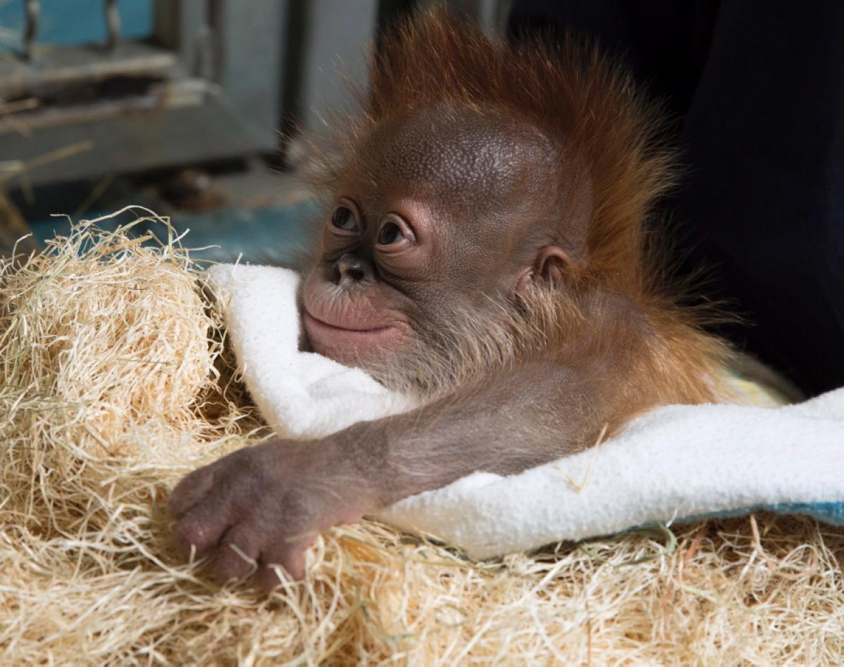 50 Cute Baby Animals That Will Melt Even Stone Cold Heart.
