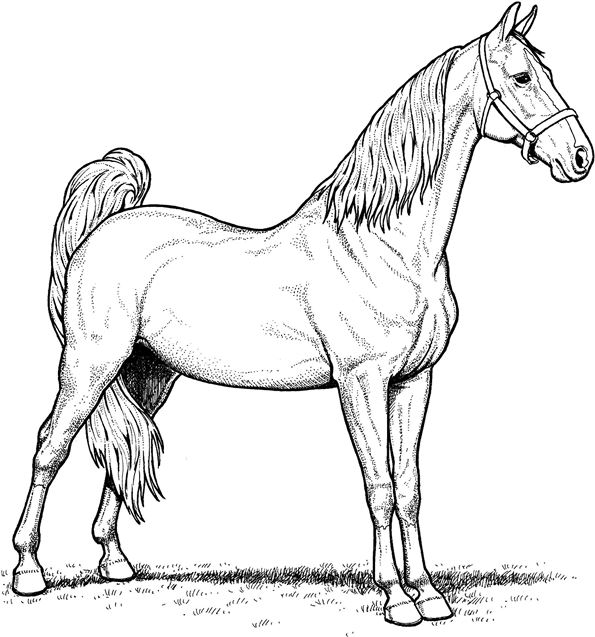 realistic horse breeds # 39