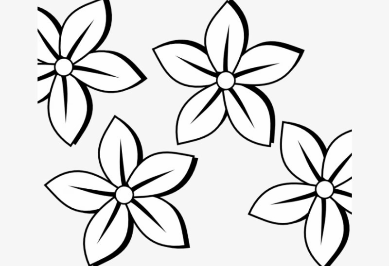 Outlines Of Flowers For Colouring Daisy Flower Daisy ...