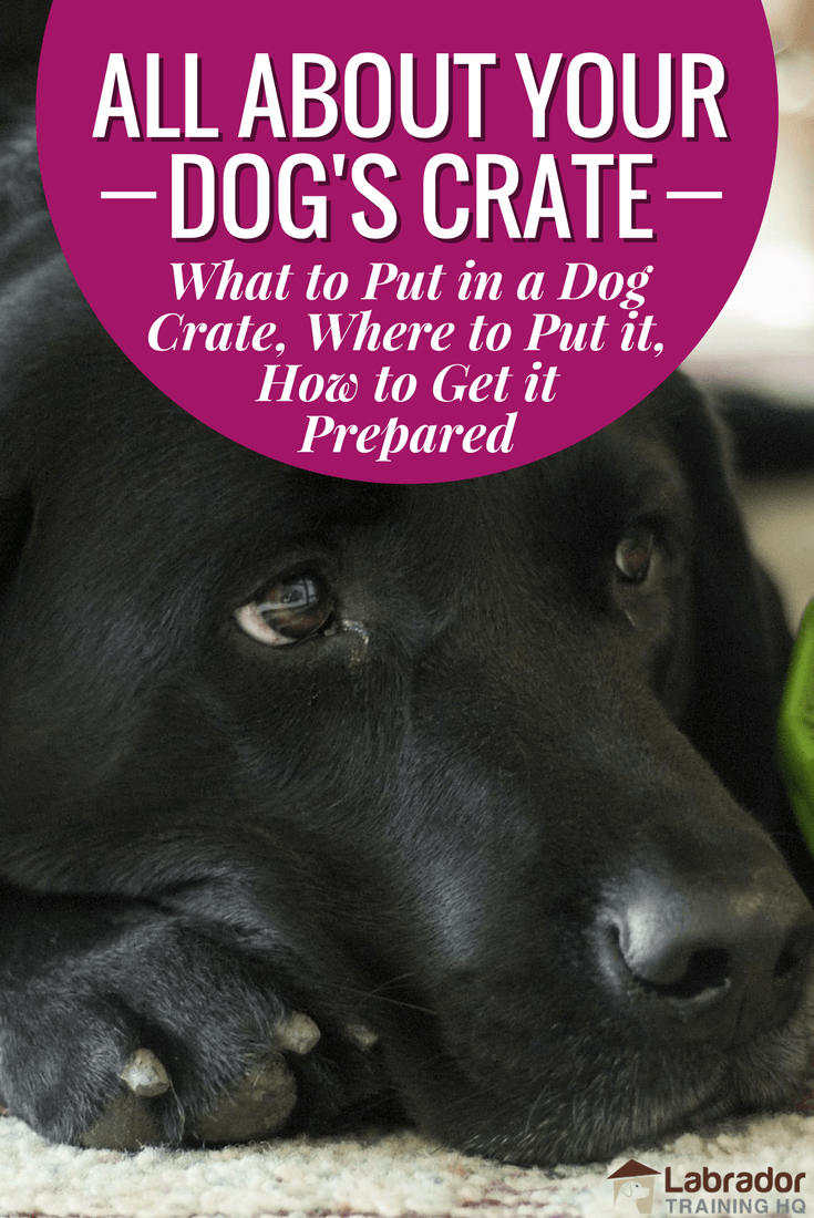 What to put in a dog crate  where to put it  how to get it prepared You need to know what to put in a dog crate and where to put it