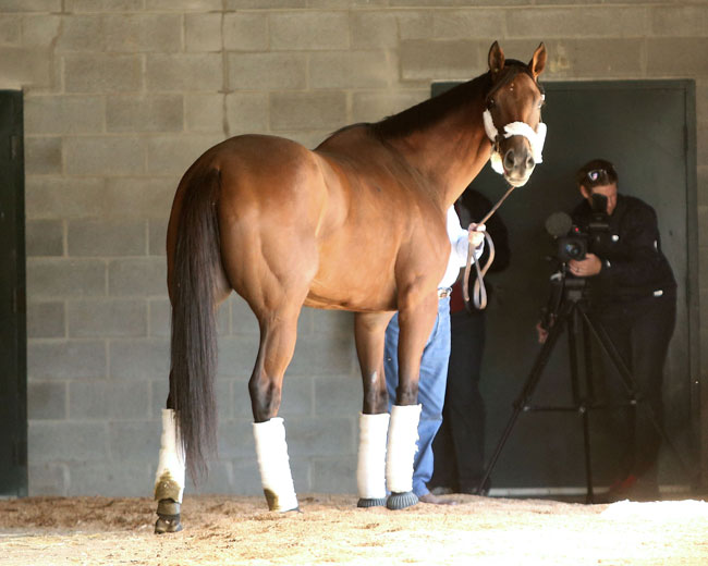 Beholder Will Not Compete In Breeders Cup Classic