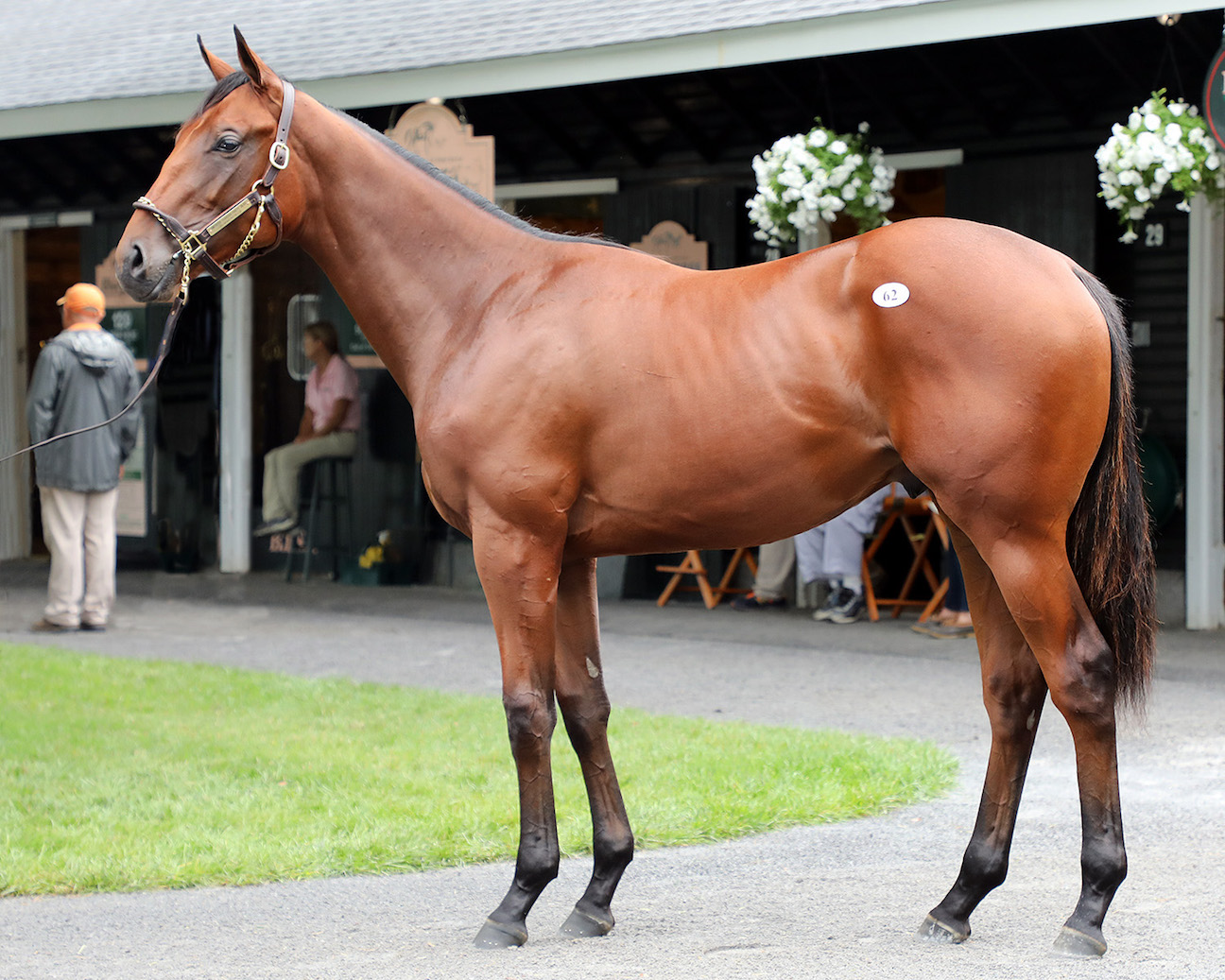 Two American Pharoah Yearlings Reach Seven Figures To Top