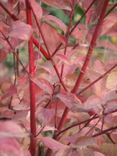 What Causes Plant Leaves Turn Yellow